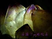 網誌用的圖片:DSCN1586~1.jpg