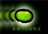 網誌用的圖片:DSCN1099~1.jpg