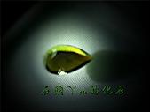 網誌用的圖片:DSCN0998~1.jpg