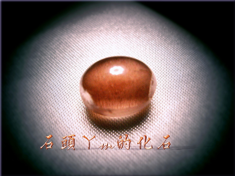 網誌用的圖片:DSCN1986~1.jpg