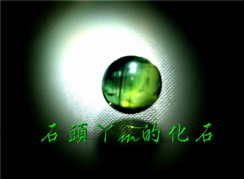 網誌用的圖片:DSCN1311~1.jpg