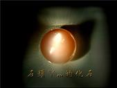 網誌用的圖片:DSCN0877~1.jpg