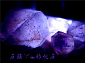 網誌用的圖片:DSCN1588~1.jpg