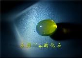 網誌用的圖片:DSCN1432~1.jpg