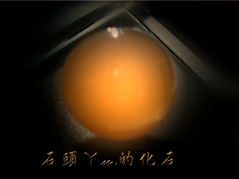 網誌用的圖片:DSCN0868~1.jpg