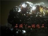 網誌用的圖片:DSCN0920~1.jpg