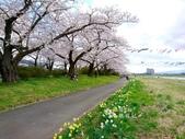 日本東北賞櫻:日本東北-031.jpg