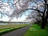 日本東北賞櫻:日本東北-037.jpg