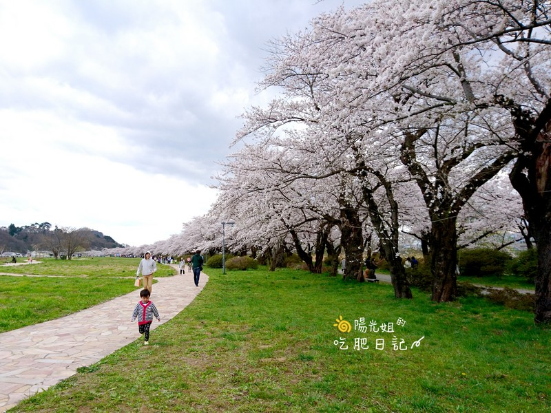 日本東北賞櫻:日本東北-033.jpg