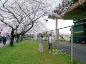 日本東北賞櫻:日本東北-036.jpg