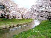 日本東北賞櫻:日本東北-024.jpg