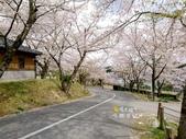 日本東北賞櫻:日本東北-015.jpg