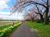 日本東北賞櫻:日本東北-030.jpg