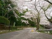 日本東北賞櫻:日本東北-009.jpg