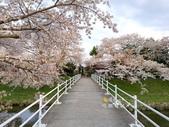 日本東北賞櫻:日本東北-023.jpg