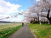 日本東北賞櫻:日本東北-032.jpg