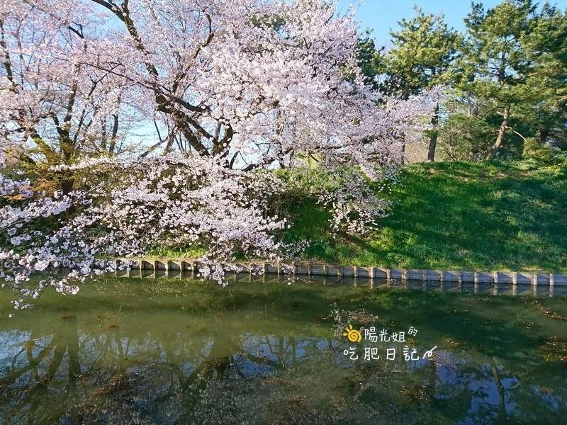 日本東北-053.jpg - 日本東北賞櫻