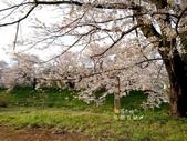 日本東北賞櫻:日本東北-022.jpg