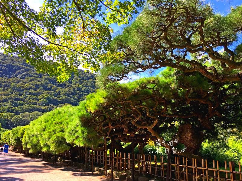 香川高松栗林公園:高松香川栗林公園061.jpg