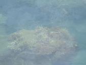 20120716~0717東澳+七星潭+錐麓古道:IMG_2145.JPG