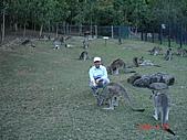 2008.05.22~27澳洲黃金海岸(一):DSC06665.JPG