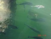 2008.05.22~27澳洲黃金海岸(三):DSC07029.JPG