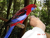 2008.05.22~27澳洲黃金海岸(一):DSC06542.JPG