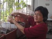 盆栽-:美濃瓜-016.JPG