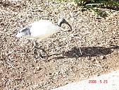2008.05.22~27澳洲黃金海岸(一):DSC06387.JPG