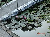 2009.04.24~27台北高峰會(一):0141.JPG