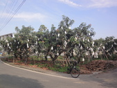Bicycle-2015.05.13-南一高球場,高鐵(一):綠竹筍園-0008.JPG