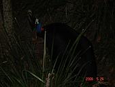 2008.05.22~27澳洲黃金海岸(一):DSC06675.JPG