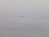 2014.06.16~18東北角海岸宜蘭賞鯨豚(五):賞鯨豚&龜山島-060.JPG