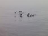 2014.06.16~18東北角海岸宜蘭賞鯨豚(五):賞鯨豚&龜山島-061.JPG
