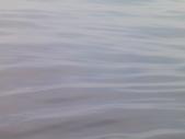2014.06.16~18東北角海岸宜蘭賞鯨豚(五):賞鯨豚&龜山島-063.JPG
