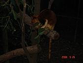 2008.05.22~27澳洲黃金海岸(一):DSC06677.JPG