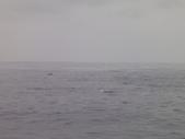 2014.06.16~18東北角海岸宜蘭賞鯨豚(五):賞鯨豚&龜山島-065.JPG