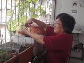 盆栽-:美濃瓜-018.JPG