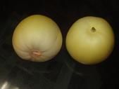 盆栽-:美濃瓜-023.JPG