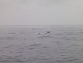 2014.06.16~18東北角海岸宜蘭賞鯨豚(五):賞鯨豚&龜山島-067.JPG