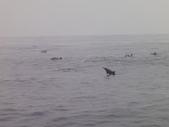 2014.06.16~18東北角海岸宜蘭賞鯨豚(五):賞鯨豚&龜山島-068.JPG