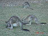 2008.05.22~27澳洲黃金海岸(一):DSC06678.JPG
