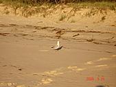 2008.05.22~27澳洲黃金海岸(一):DSC06468.JPG