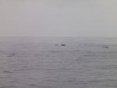 2014.06.16~18東北角海岸宜蘭賞鯨豚(五):賞鯨豚&龜山島-069.JPG