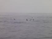 2014.06.16~18東北角海岸宜蘭賞鯨豚(五):賞鯨豚&龜山島-070.JPG