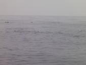 2014.06.16~18東北角海岸宜蘭賞鯨豚(五):賞鯨豚&龜山島-071.JPG