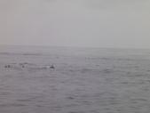 2014.06.16~18東北角海岸宜蘭賞鯨豚(五):賞鯨豚&龜山島-072.JPG