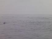 2014.06.16~18東北角海岸宜蘭賞鯨豚(五):賞鯨豚&龜山島-074.JPG
