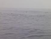 2014.06.16~18東北角海岸宜蘭賞鯨豚(五):賞鯨豚&龜山島-075.JPG