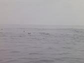 2014.06.16~18東北角海岸宜蘭賞鯨豚(五):賞鯨豚&龜山島-076.JPG